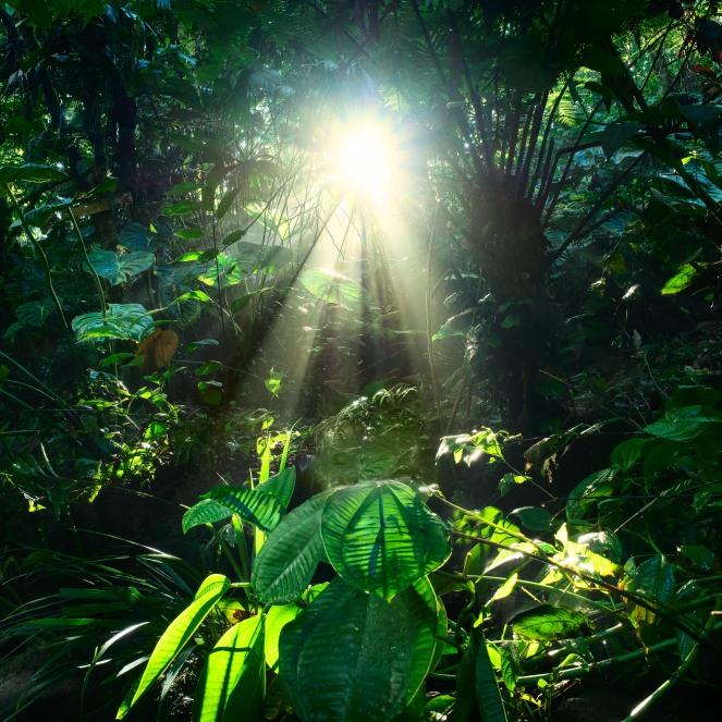 nature-forest-branch-light-wood-sun-422024-pxhere.com.jpg