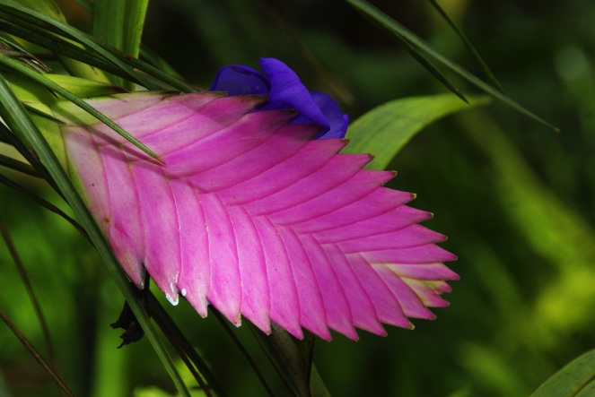 nature-grass-plant-meadow-leaf-flower-1061200-pxhere.com