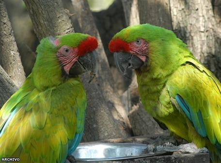 Q Significa Parrot DesFuturo: Flora y Fau...