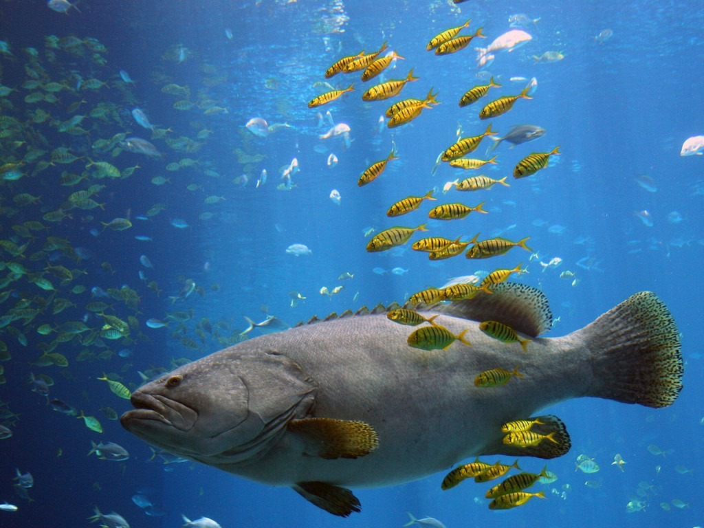 Contaminaci n sonora es una amenaza para los peces - Fotos de peces del mediterraneo ...
