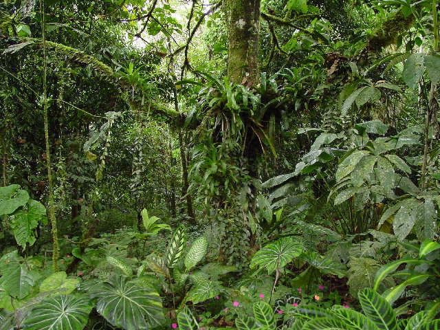 La Espesa Selva Selva