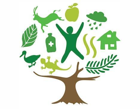 2011: Año Internacional de los Bosques – viviendo en la tierra