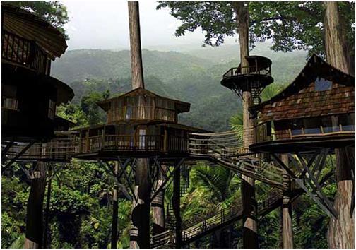 Finca bellavista viviendo en los rboles viviendo en la for Hotel con casas colgadas de los arboles
