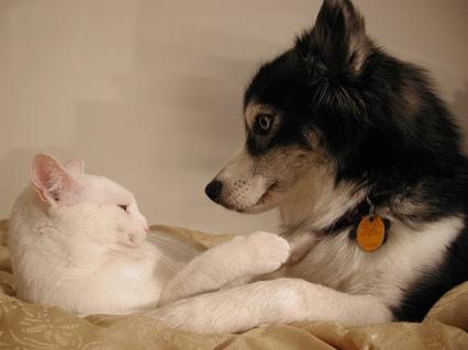 Foto Del Día Perros Y Gatos