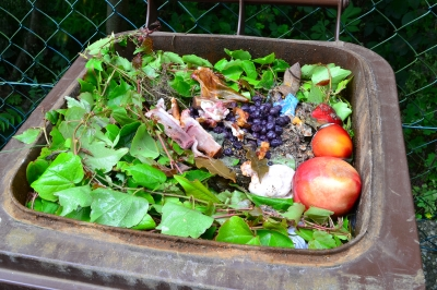 organic-waste-in-bin